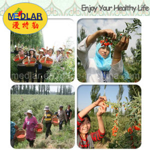 Medlar Lbp Weight Control Wolfberry Dried Goji