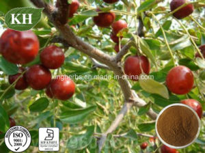 Pure Natural Zizyphus Vulgaris Extract/Spine Date Seed Extract Jujuboside 2% pictures & photos
