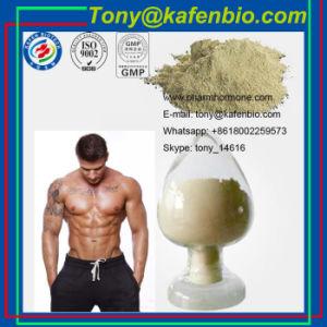 Sex Protein Supplements White Powder Sex Enhancement Yohimbine HCl pictures & photos