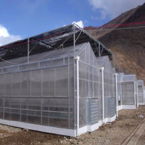 Hot Multi-Span PC Greenhouse for Seeding pictures & photos