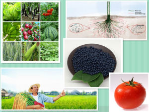Organic Granular Chicken Manure Fertilizer pictures & photos