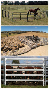 Used Galvanized Heavy Duty Livestock Yards Panel pictures & photos