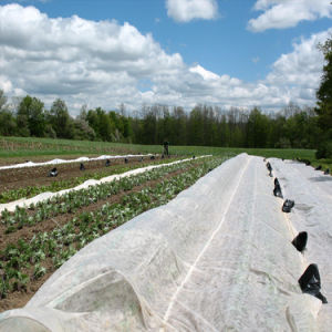 Crop Covers Polypropylene Spun Bonded Non-Woven Fabric UV Stabilised pictures & photos