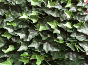 Artificial IVY Leaf Garden Hedge for Outdoor Decoration (MW16005) pictures & photos