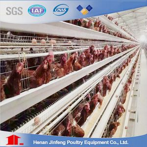 New Design Cheap Automated Chicken Birds Cage for India pictures & photos