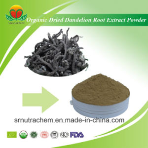 High Quality Organic Dried Dandelion Root Extract Powder pictures & photos