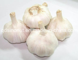 2016 Crop High Quality Fresh Garlic pictures & photos