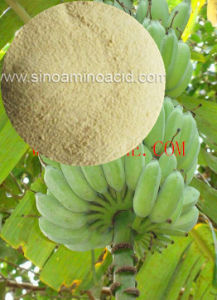 Amino Acid Compound Organic Fertilizer pictures & photos