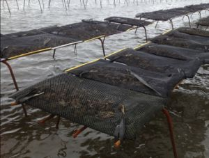 Aquaculture Fish Farming Cages/Aquaculture Oyster Net Cage pictures & photos