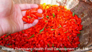 Dried Goji Berry From Origion Ningxia