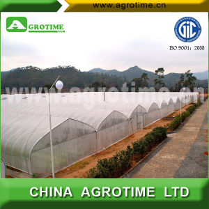 Large Multi-Span Plastic Greenhouse for Sale (CMS3212)