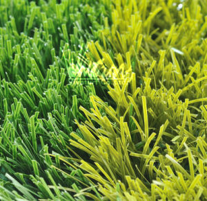 Synthetic Field Turf (S50117)