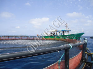 Aquaculture Circular Farming Rainbow Fishing Cages pictures & photos