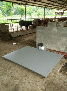 Animal Scale for Sheep 1X1m 3ton with Rails pictures & photos