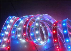 RGB LED Strip Lamp / LED Strip Light (ZDM-LSL3528-WPG60-12W)