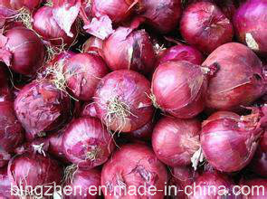 5.0cm New Crop Fresh Onion From Jinxiang, China. pictures & photos