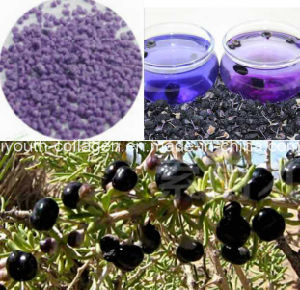 100% Natural Wild Black Wolfberry/Chinese Wolfberry Granular Beverage/Health Food/Whitening/King of Anthocyanins/Anticancer/Anti-Aging pictures & photos