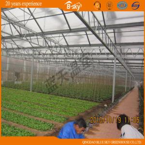 Multi-Span Venlo Type Glass Greenhouse pictures & photos