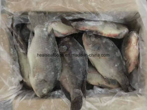 Chinese Factory Price of Frozen Black Tilapia pictures & photos