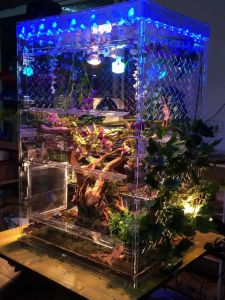 Acrylic Reptile Box, LED Box pictures & photos