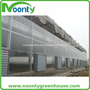 Polycarbonate Greenhouse, Glass Greenhouse pictures & photos