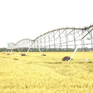 Lateral Move Farm Irrigation System From Sprinkler Irrigation Manufacturers pictures & photos