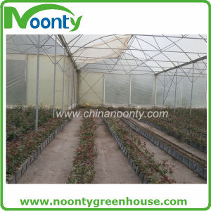 PP Hydroponics Growing Trough System for Strawberry, Cucumber, Watermelon, Eggplant, Pepper, Tomato with Commercial Farm Tunnel and Multi-Span Greenhouse pictures & photos