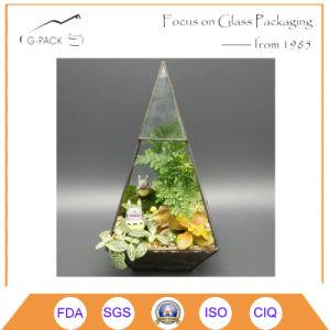 Tabletop Geometric Glass Terrarium Box Succulent Moss Fern Cacti Case pictures & photos