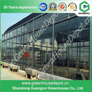Hifh Quality Long Life-Span Glass Wall Greenhouse for Planting Vegetables pictures & photos