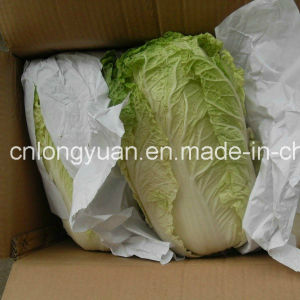 Chinese Fresh Cabbage with Good Quality pictures & photos