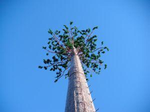Steel Galvanized Bionic Plant Antenna Bts GSM CDMA Communication Pine Tree Tower