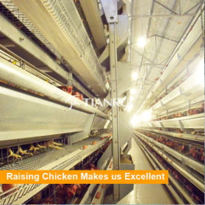 Tianrui Chicken Cage System Used Poultry Feed Mill Equipment pictures & photos