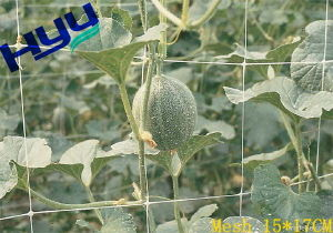 PP/PE Climbing Plant Support Netting (Mesh 15*17)