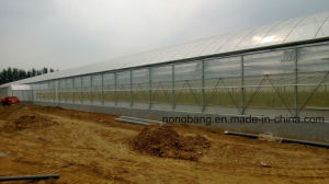Hydroponic Growing Systems Greenhouse pictures & photos