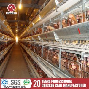 Automatic Poultry Chicken Cage with Drinking System for Poultry Farm Nigeria pictures & photos