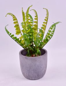Long Plants Pine Spray in Cement Pot for Office Decoration pictures & photos