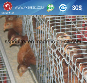 a Type Frame Poultry Farm Chicken Cage Broiler pictures & photos
