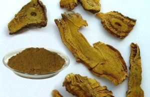 Giant Knotweed Extract 50%-99%Resveratrol for Anti-Cancer pictures & photos