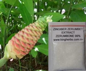 Zingiber Zerumbone Smith Extract, CAS#: 471-05-6, Zerumbone 99% pictures & photos