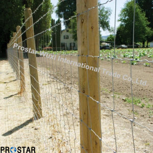 Deer Wire Mesh Fence for Hunting pictures & photos