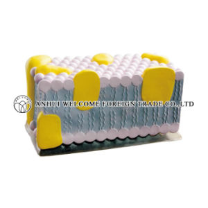 Model of Cell Membrane for Medical Teaching pictures & photos