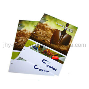 Full Color Cheap Catalogue with 3 Punch Hole Catalogue Printing Service (jhy-348) pictures & photos