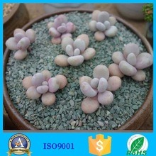 High Quality Zeolite for The Gardening