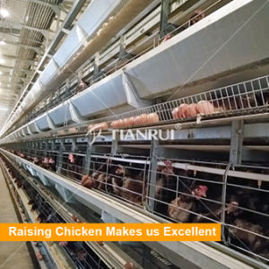 Hot Selling Low Price Automatic Chicken layer cage system pictures & photos