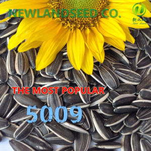 Heath and Edible Sunflower Seeds with Long Type 5009