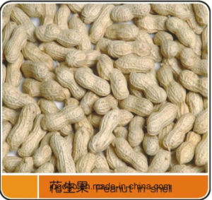 Best-Selling Peanut Kernals for Sale pictures & photos