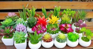 Artificial Plants and Flowers of Succulent Plant Gu-Jys-00040 pictures & photos