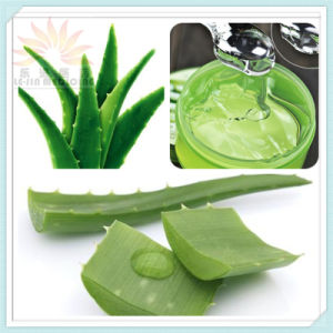 100% Nature Aloe Vera Gel Extract with GMP Standard (LJ-H-06)