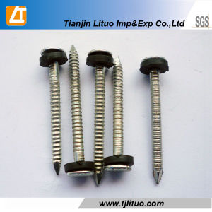 40 Mm Ring Shank Common Nails Electric Galvanized pictures & photos