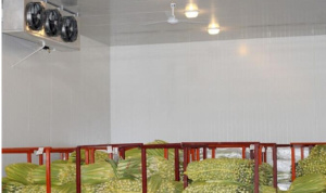 Fruit Vegetables Cold Storage Room Manufacturer and Supplier